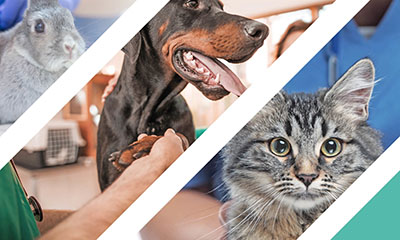 Celebrate our amazing team with us this World Veterinary Day!