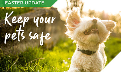 The weekend of chocolate & treats – keeping our pets safe