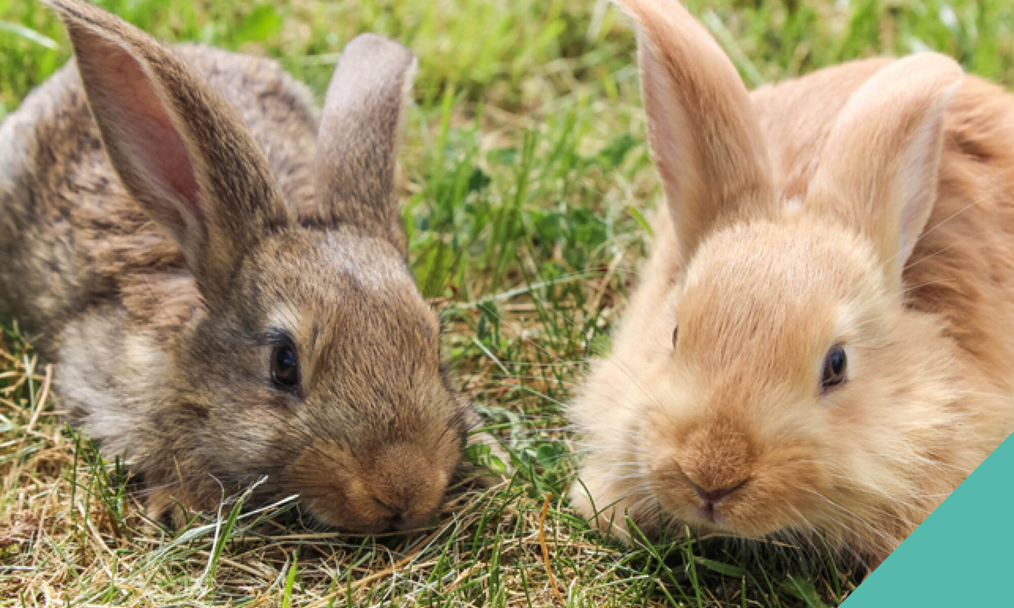 Looking after your pet rabbit in the current environment