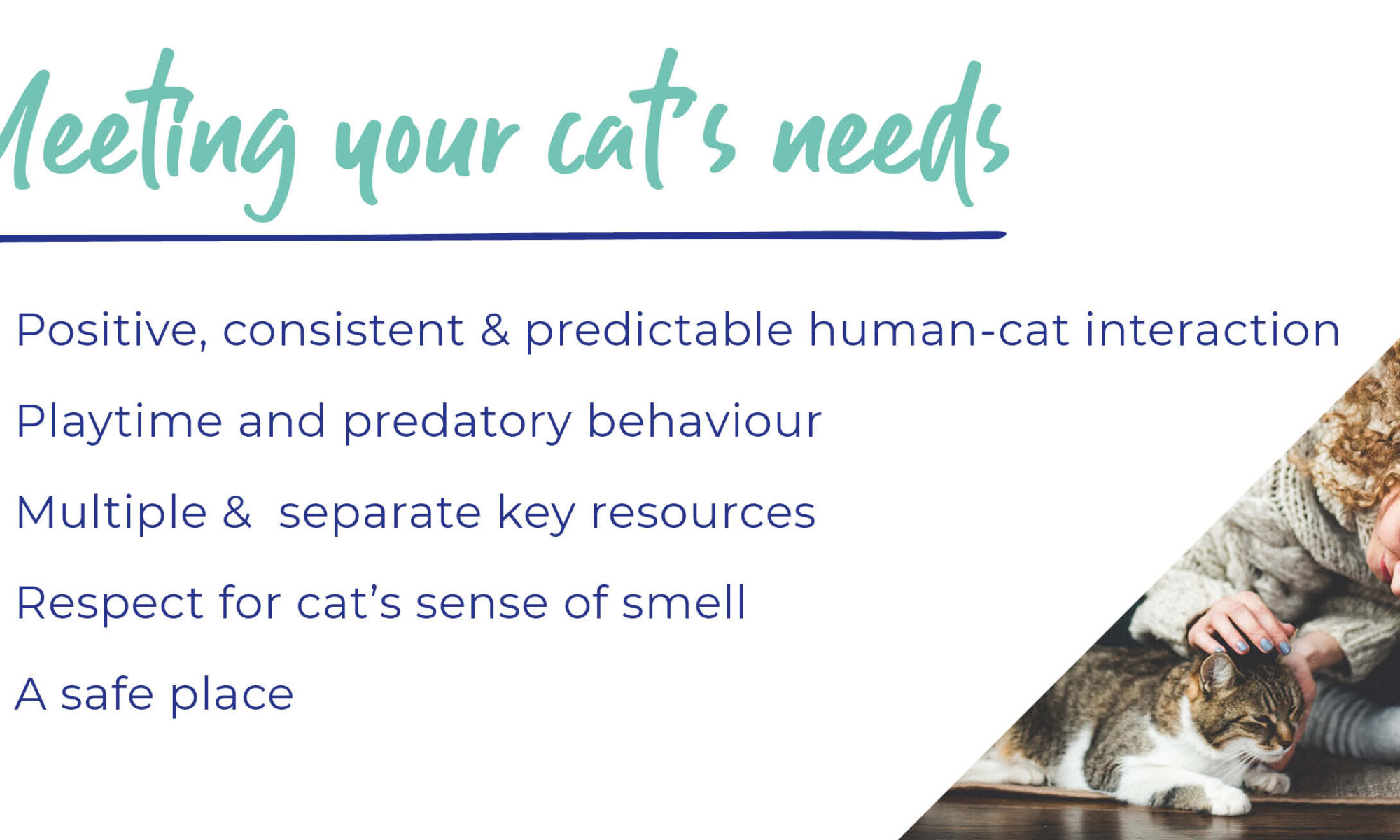 Caring for your cat – An owner's guide