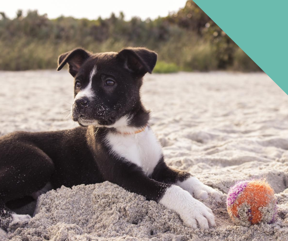 Going to the beach with your dog this summer?