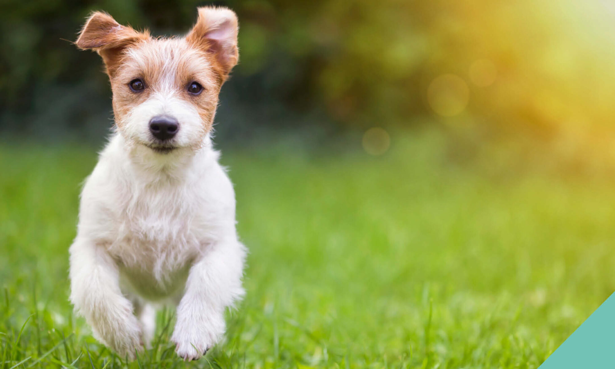 Seven interesting dog facts for you to ponder