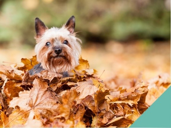 Keeping your pet safe this autumn