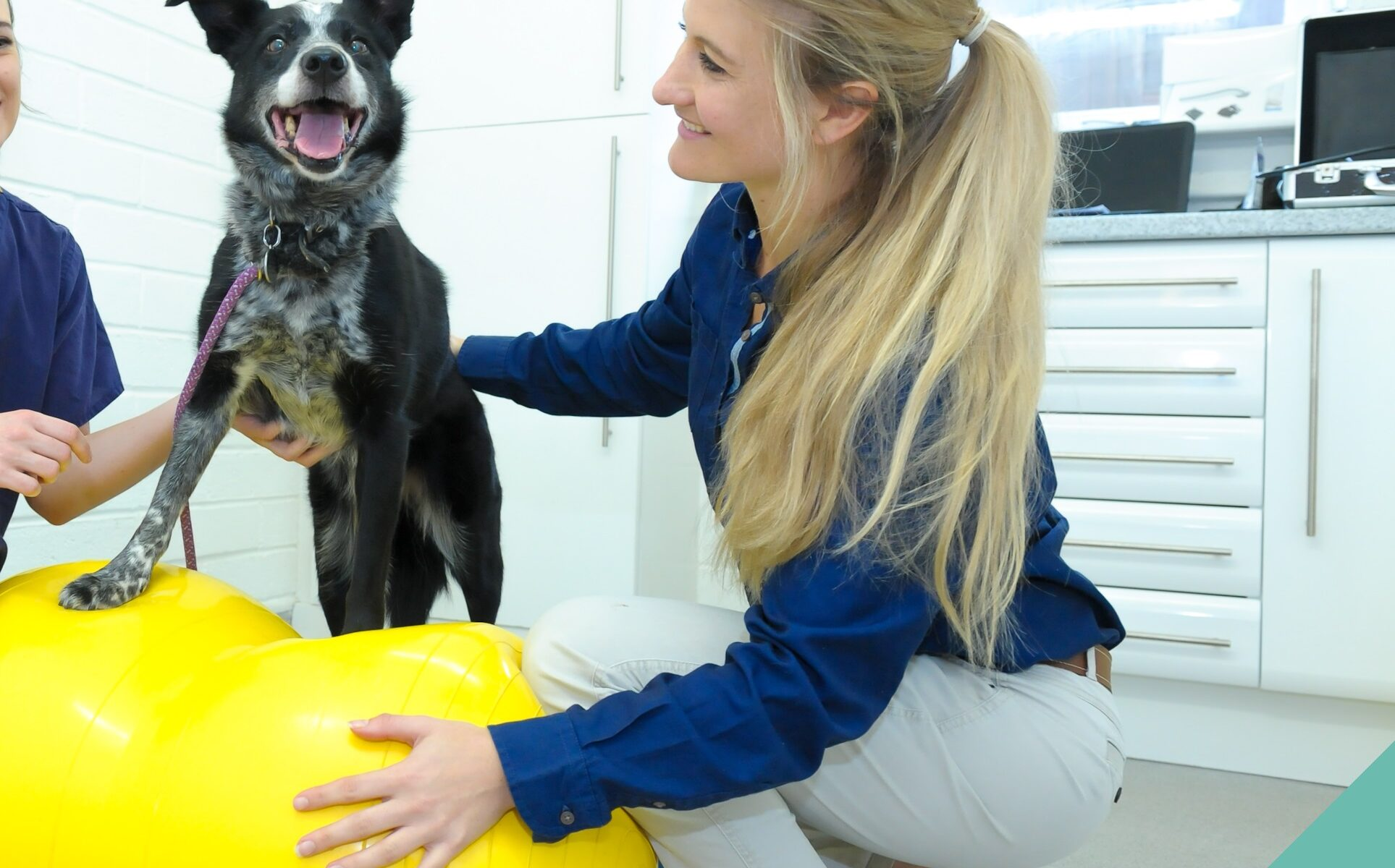 Senior Pets Physiotherapy