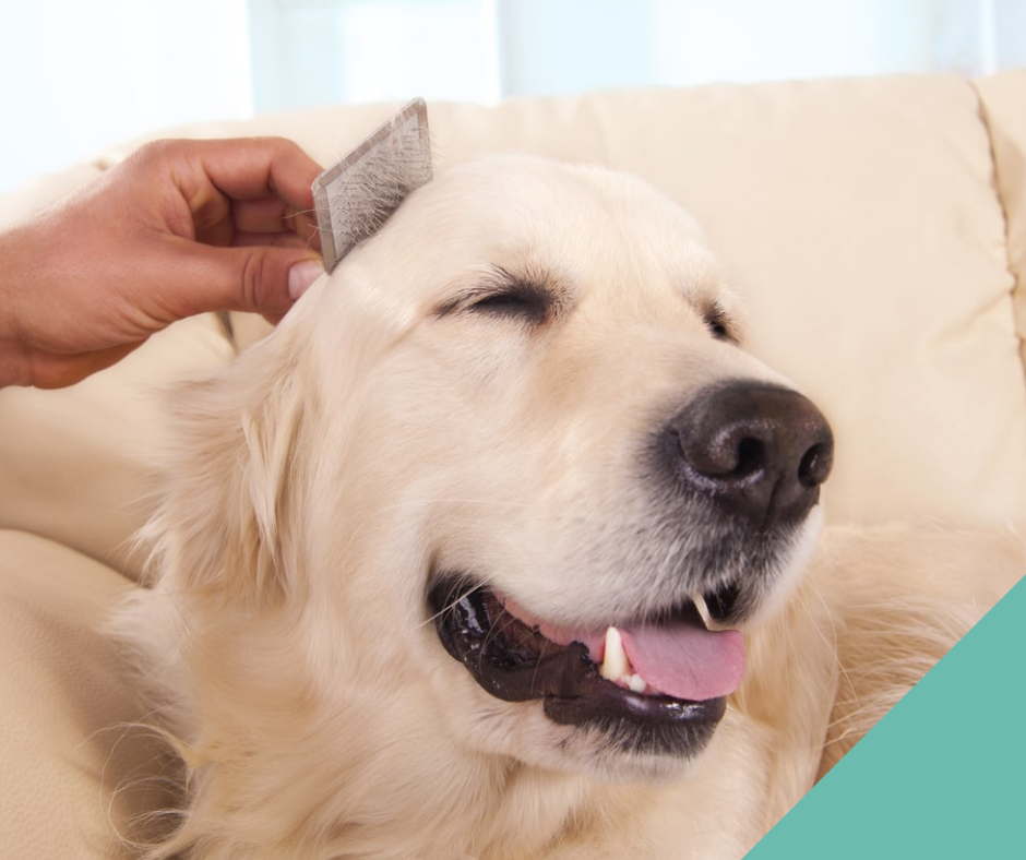 Advice on grooming your cat or dog at home