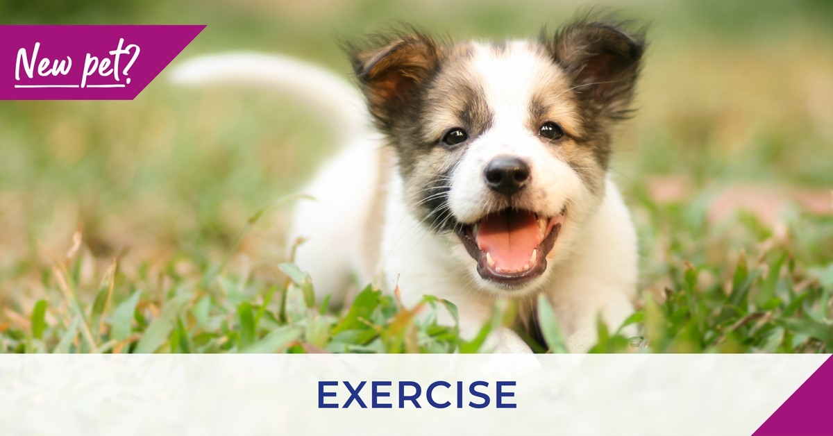 Exercising your puppy and kitten