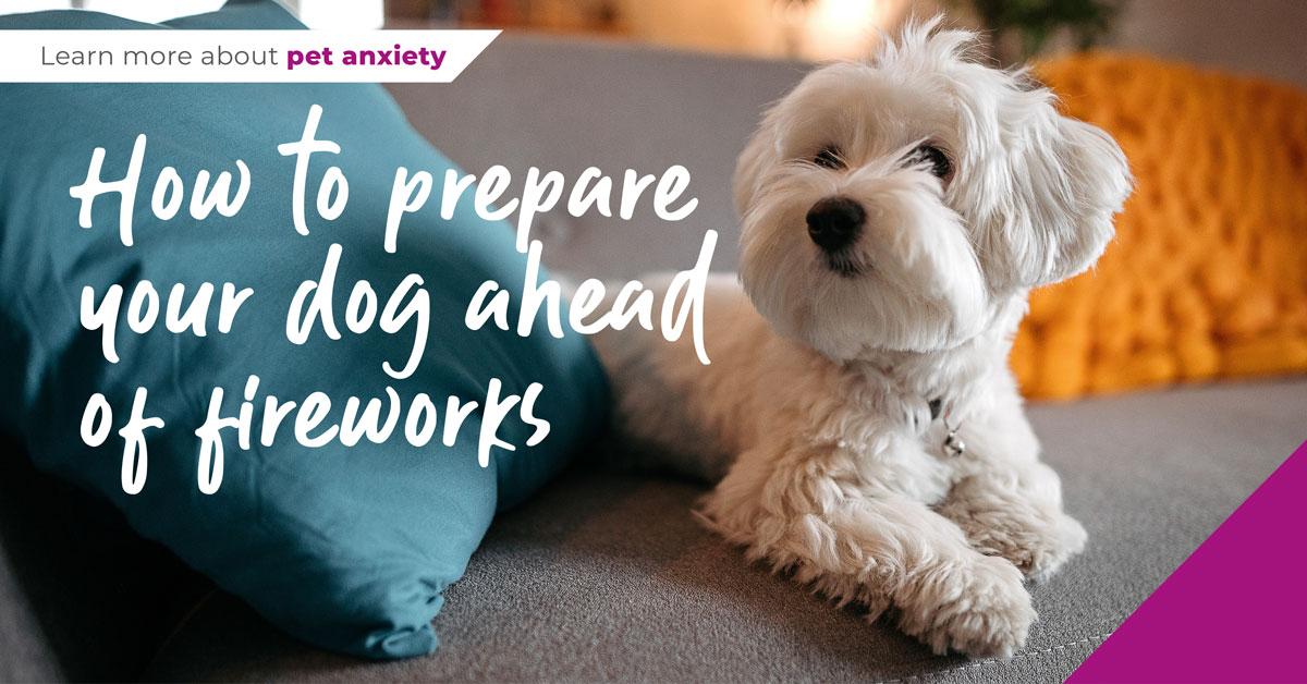 How to prepare your dog ahead of firework season