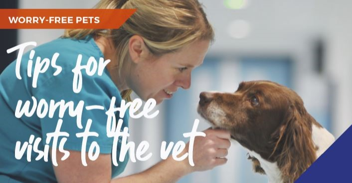 Tips for worry-free visits to the vets