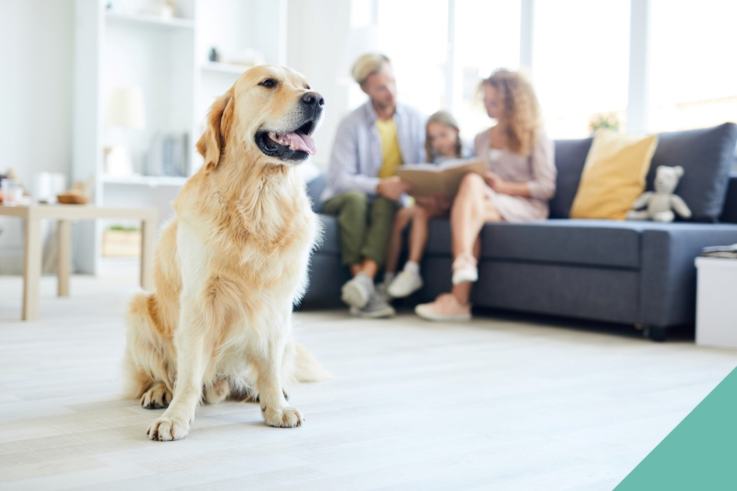 Preparing your pet for home life changes
